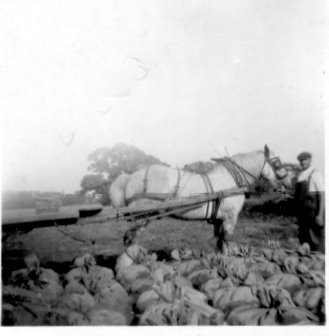 Eric with horse and sacks of something